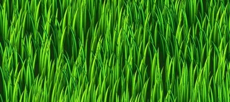 Bloggrass