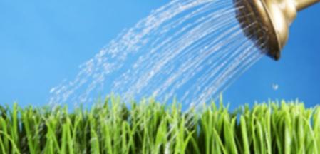 Water-gardenblog